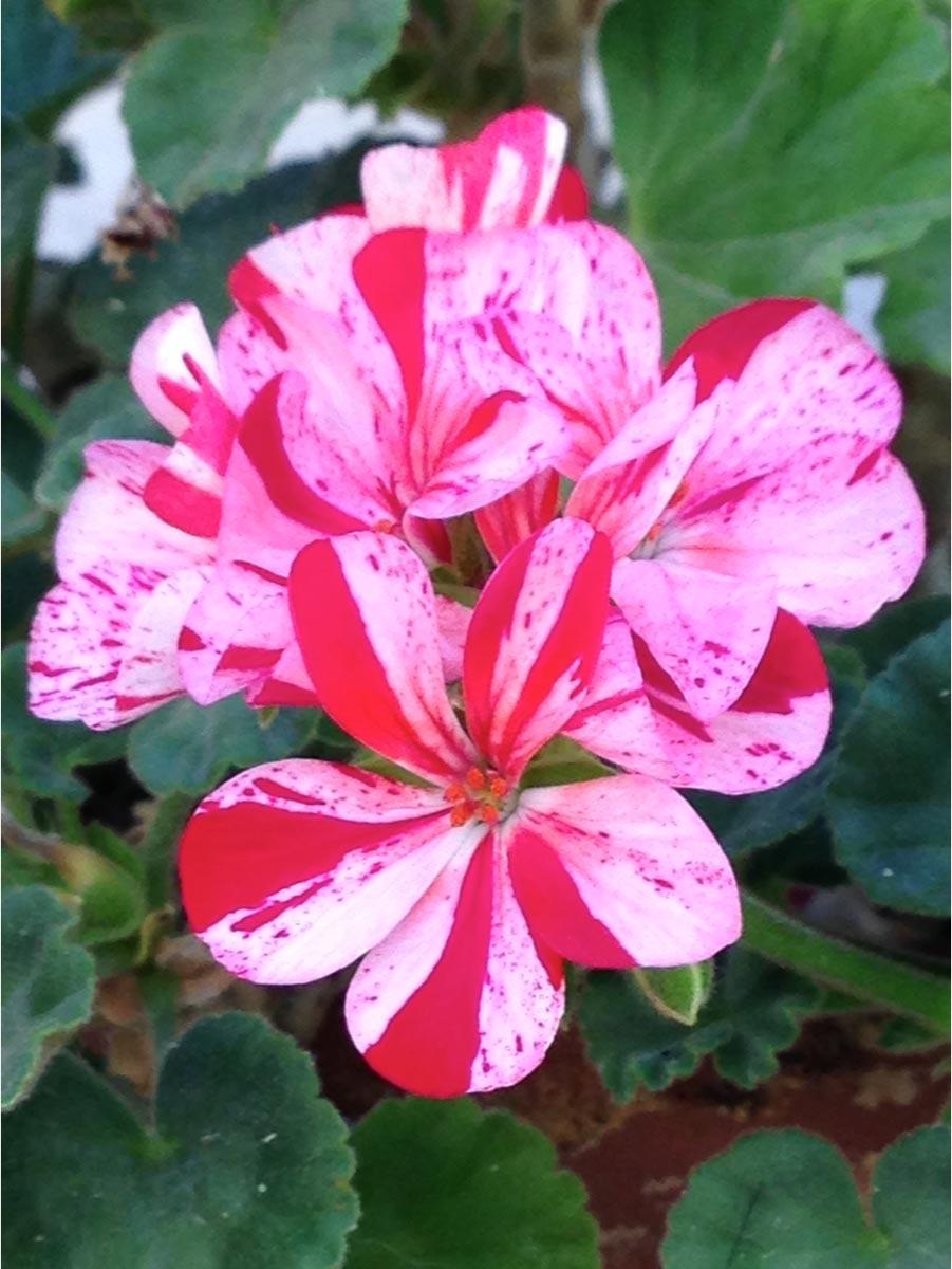 blog-flower
